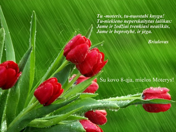 8236-Red_Tulips_in_the_Rain